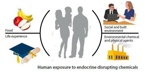 Эндокринно нарушающие вещества