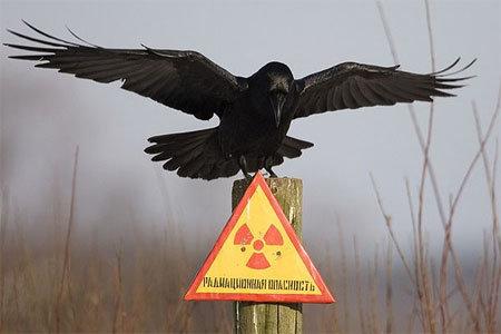 Радиактивность