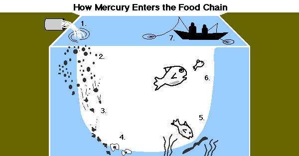 mercury_fish_01